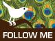 twitter-peacock